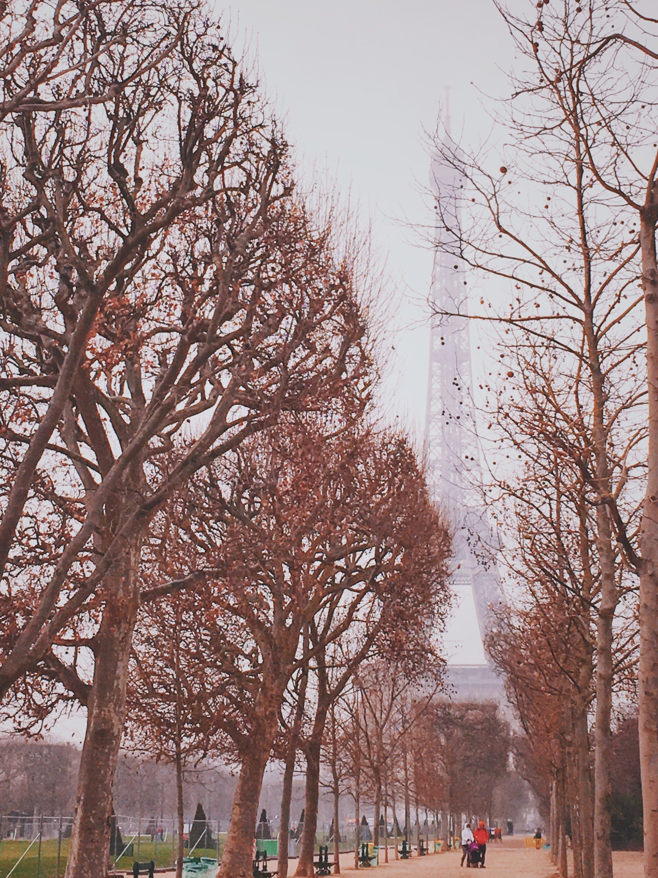 Základová fotografie zdarma na téma dřevo, eiffelovka, krajina, led