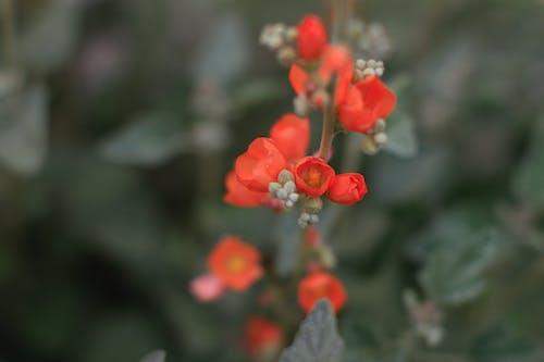 Free stock photo of 50mm, depth of field, desert, flower