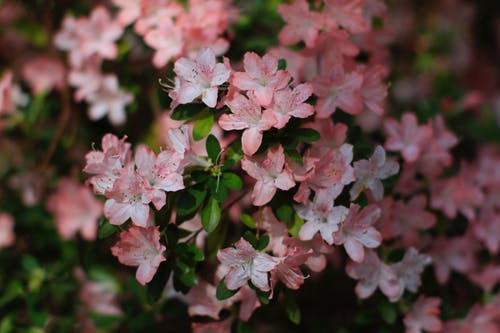 Free stock photo of blossoms, flower