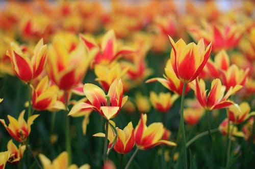 Immagine gratuita di arancia, campo, colore, crescita