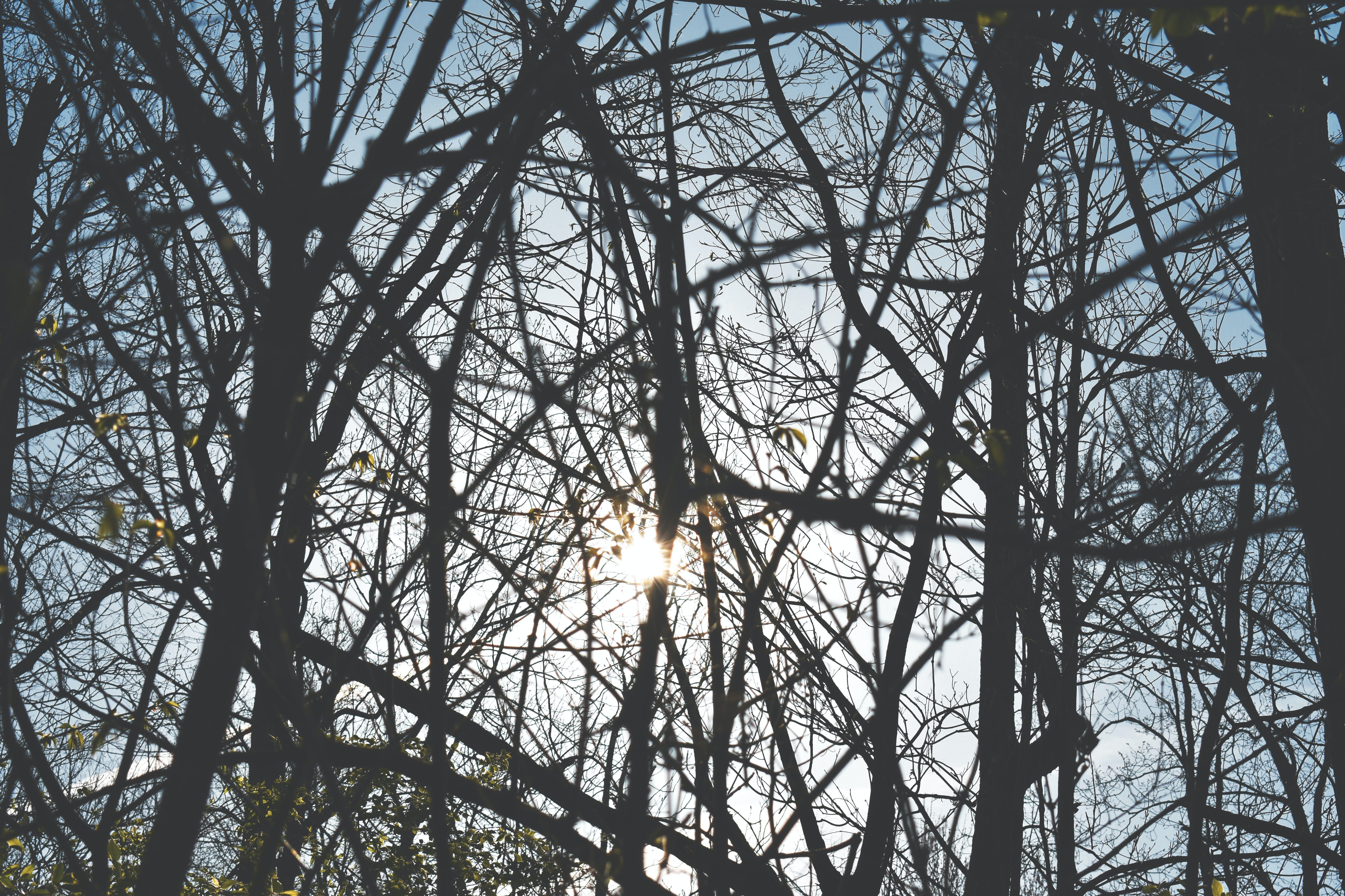 Free stock photo of #trees #woods #sun #summer #spring