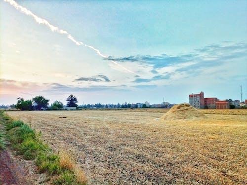 曼蘇拉, 被遺棄的建築物 的 免費圖庫相片
