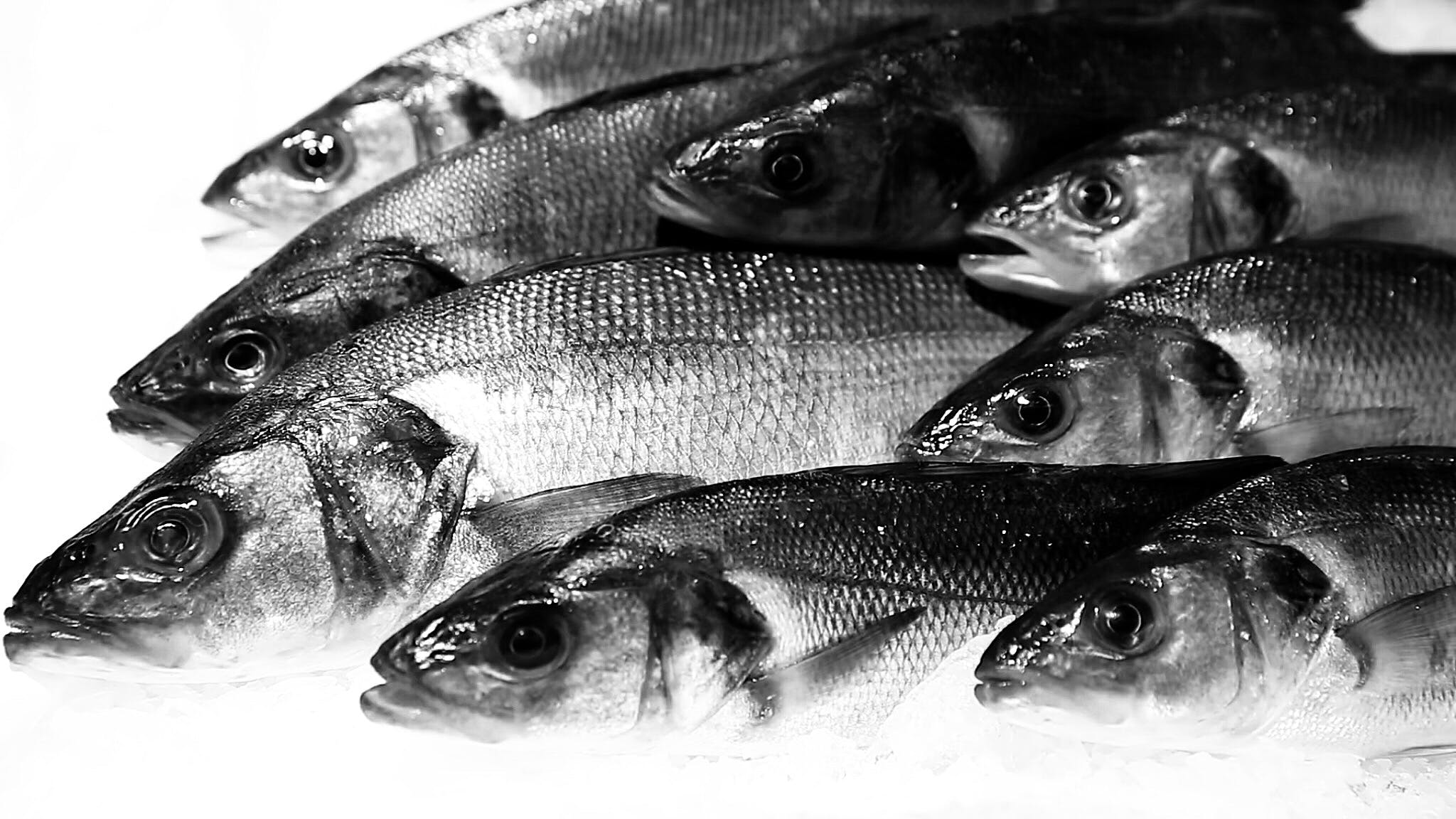 Free stock photo of fish, fish market