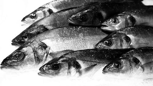 Kostenloses Stock Foto zu fisch, fischmarkt