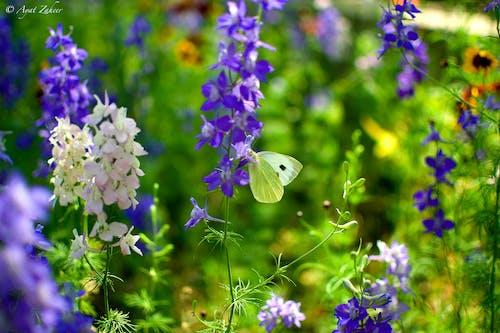 花上的蝴蝶 的 免费素材照片