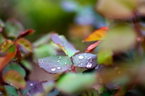 水滴在树叶上 的 免费素材照片