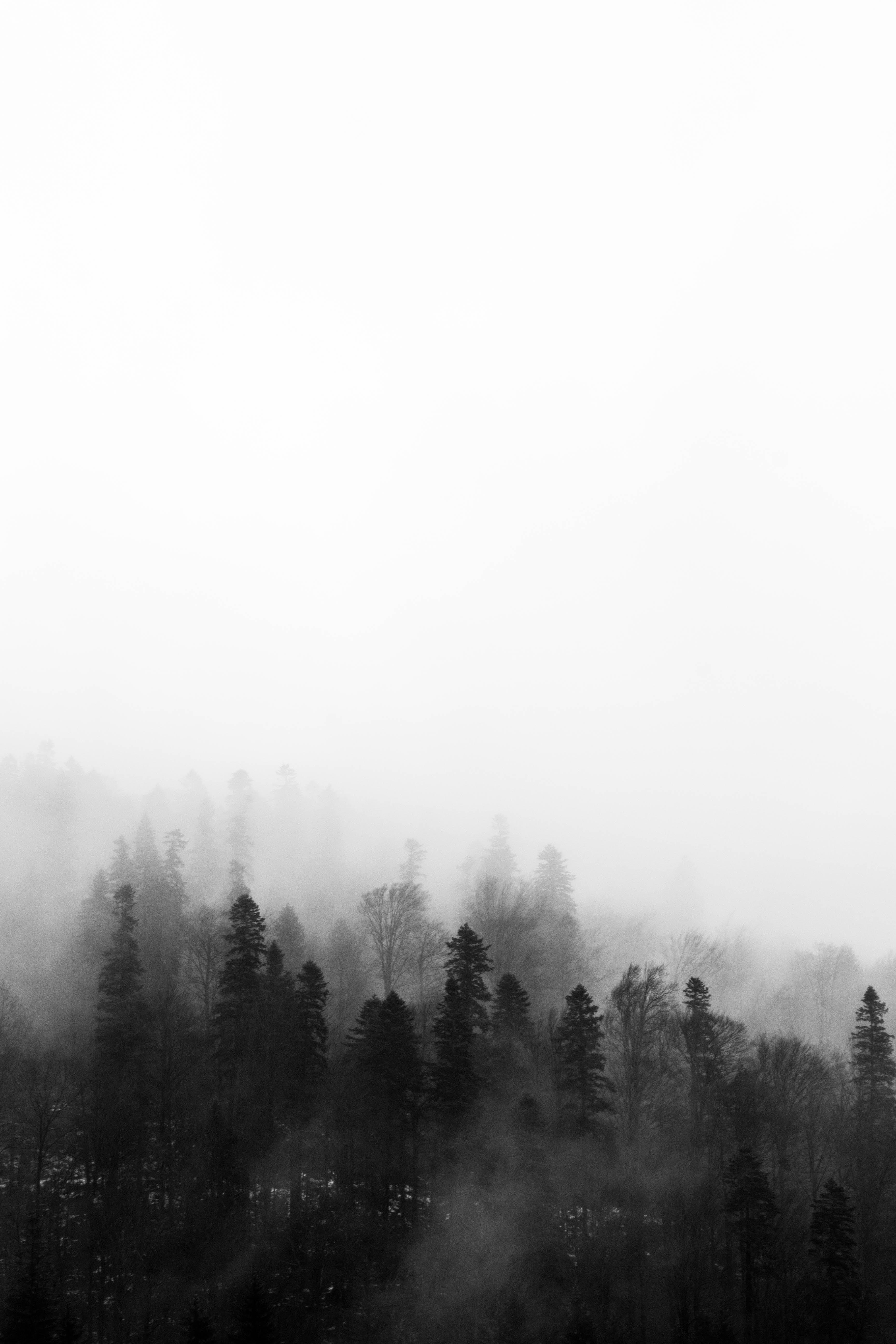 Darmowe zdjęcie z galerii z czarno-biały, drzewa, jasny, krajobraz
