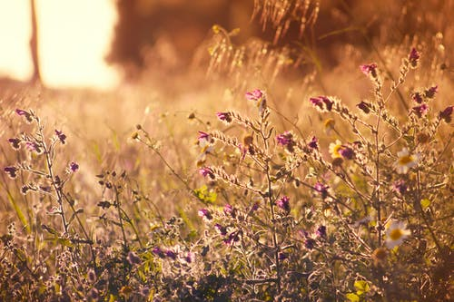 Fotobanka sbezplatnými fotkami na tému flóra, hĺbka ostrosti, jemný, krásny
