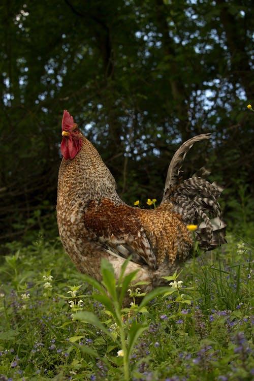 Imagine de stoc gratuită din #animale sălbatice, #pasăre