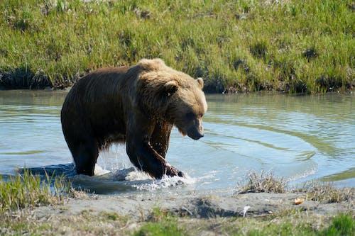 Photos gratuites de ours
