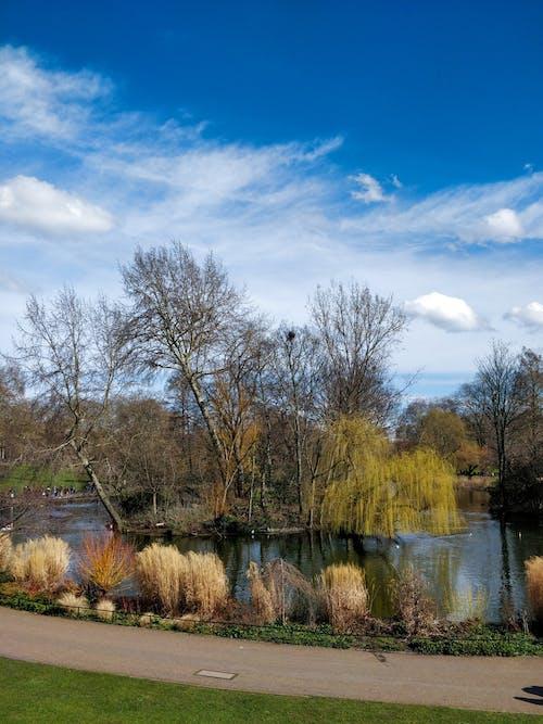 Foto d'estoc gratuïta de arbre, arbres, cel blau, jardí