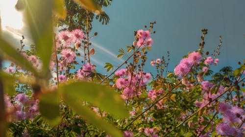 Free stock photo of beautiful, beautiful flower, beautiful flowers, bloom