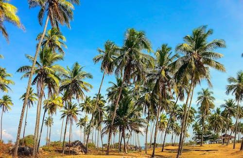Tekijänpalkkioista vapautetut kuvat tunnisteilla HD-taustakuva, luonto, palmupuut, paratiisi