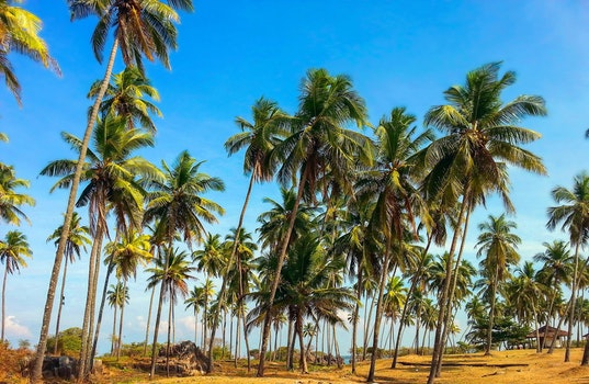 Blue and White Clear Skies With Coconut Tree