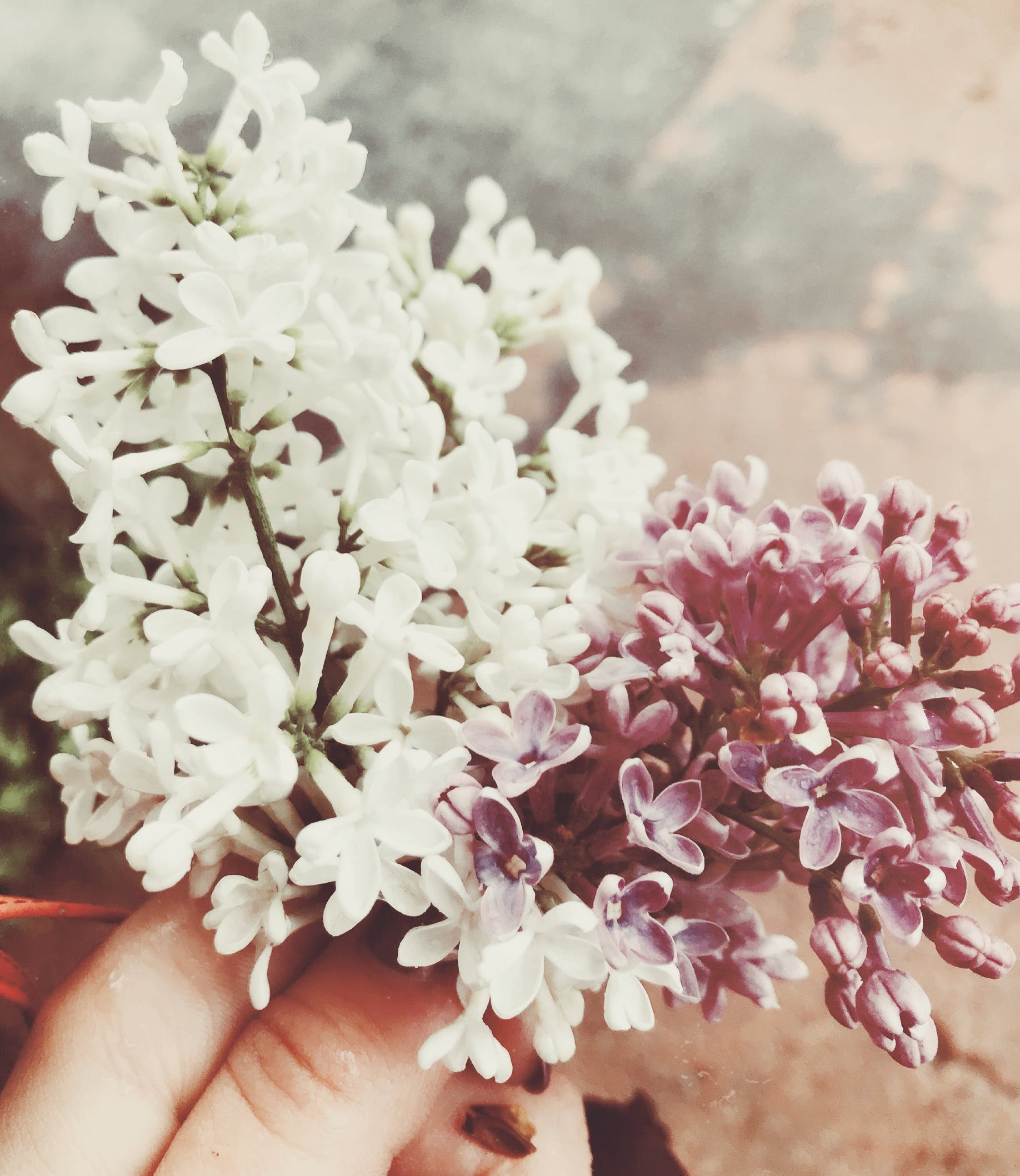 Free stock photo of beautiful flower, bunch of flowers, color palette, flowers