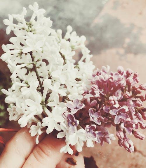 คลังภาพถ่ายฟรี ของ ความรัก, จานสี, ช่อดอกไม้, ดอกไม้