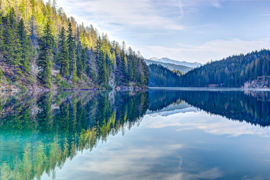 água, árvores, atraente