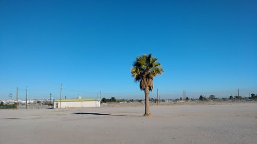 Free stock photo of palm tree desert minimalist blue sky