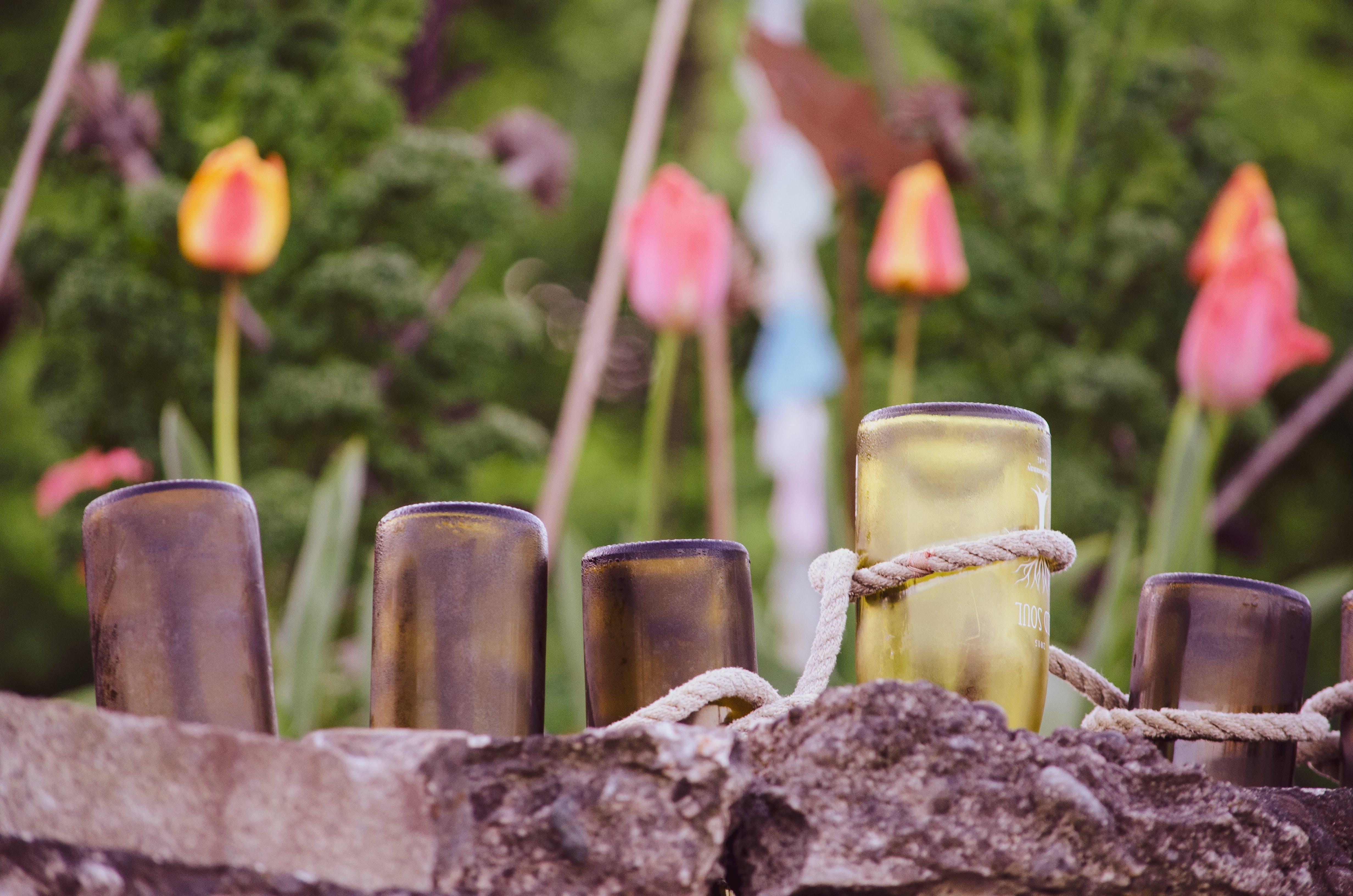 Free stock photo of flowers, garden, mason jars, pink tulip
