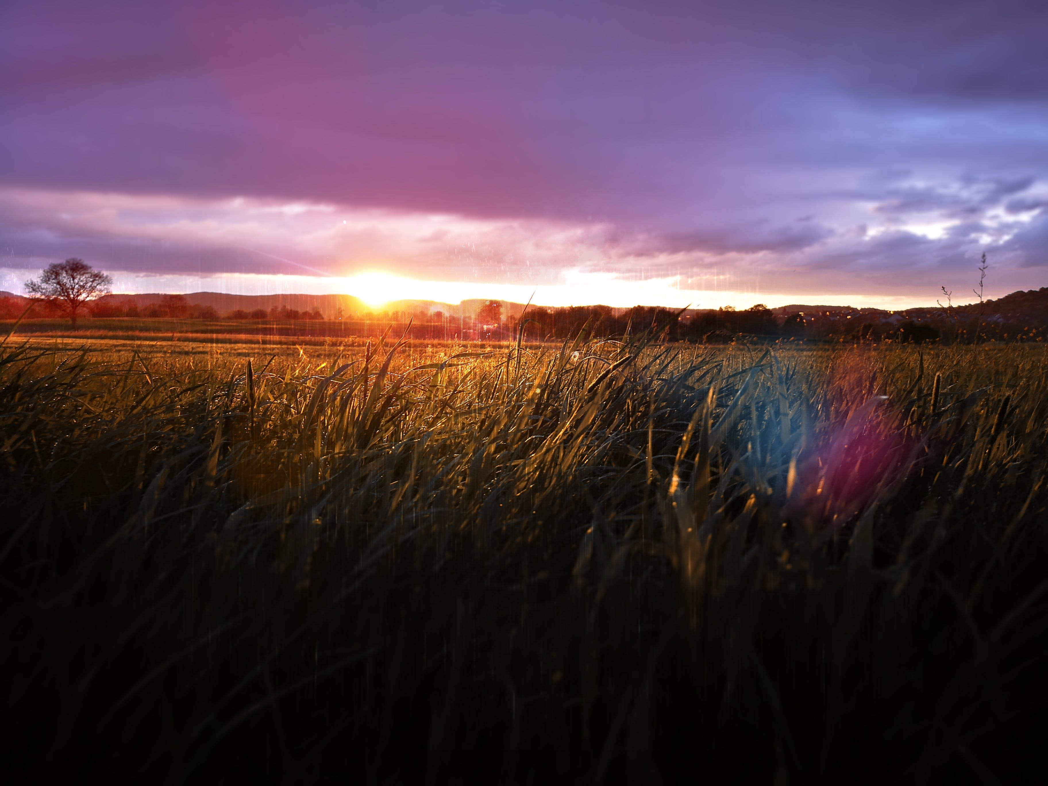 Free stock photo of fields, flare, sky, sun