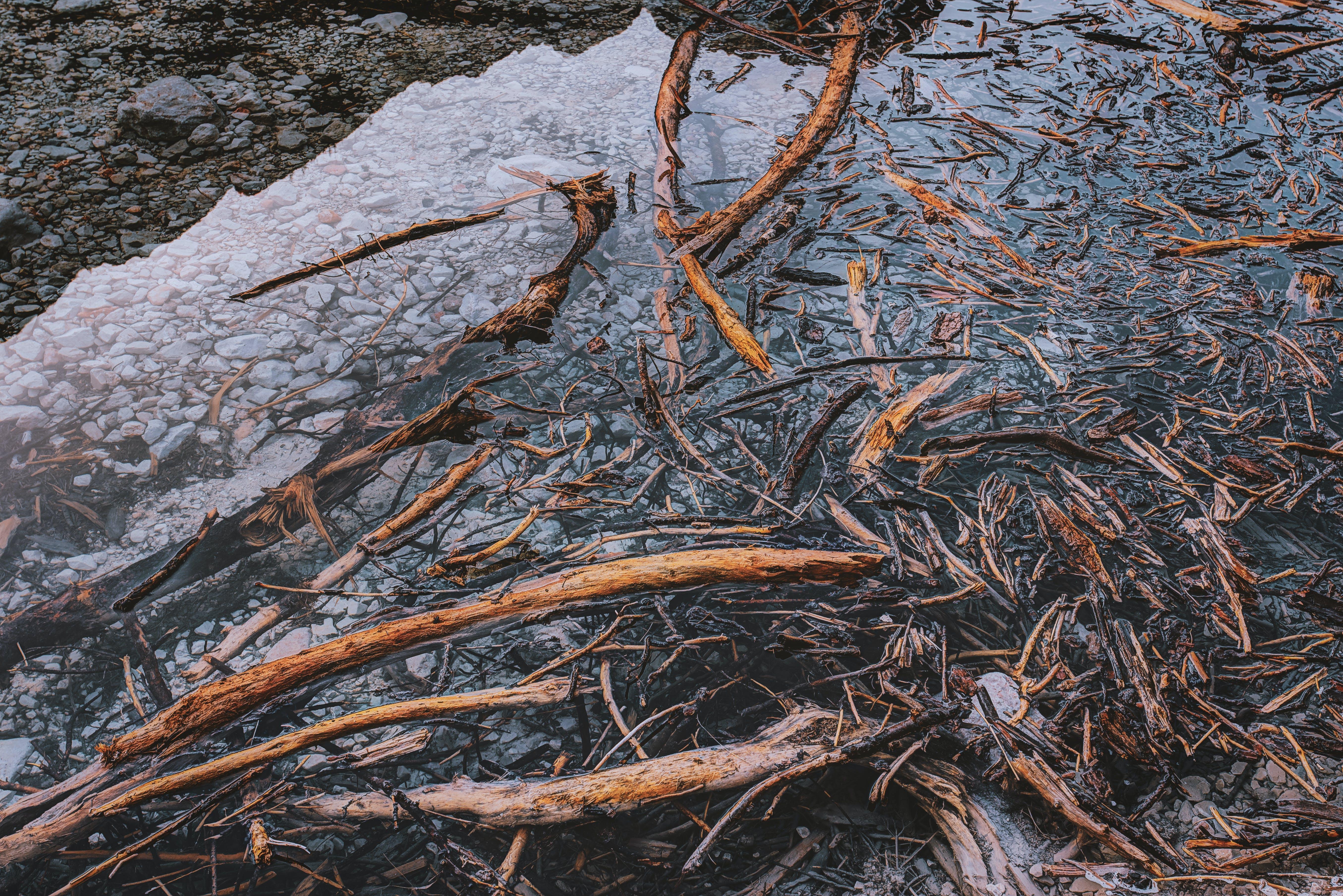 ahşap, dalgaların karaya attığı odun, kayalar, Su içeren Ücretsiz stok fotoğraf