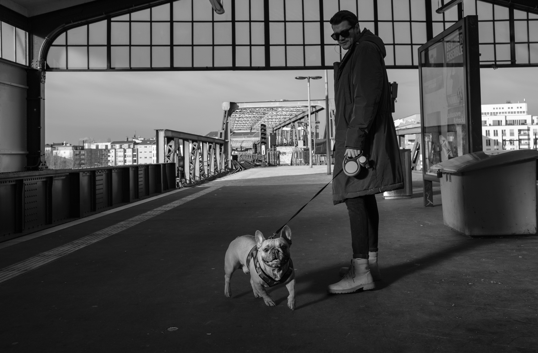 Man In Coat Holding Leash Of A English Bulldog