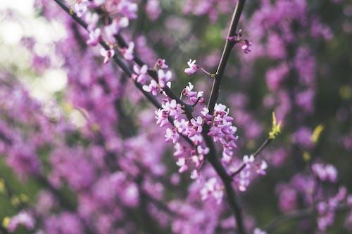 Foto d'estoc gratuïta de arbre, bonic, branca, brillant