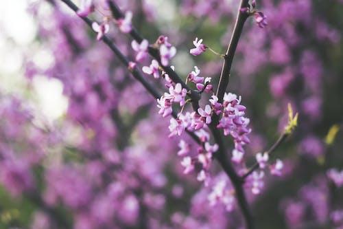 binti malu, bintimalu, 修剪花草, 公園 的 免费素材照片