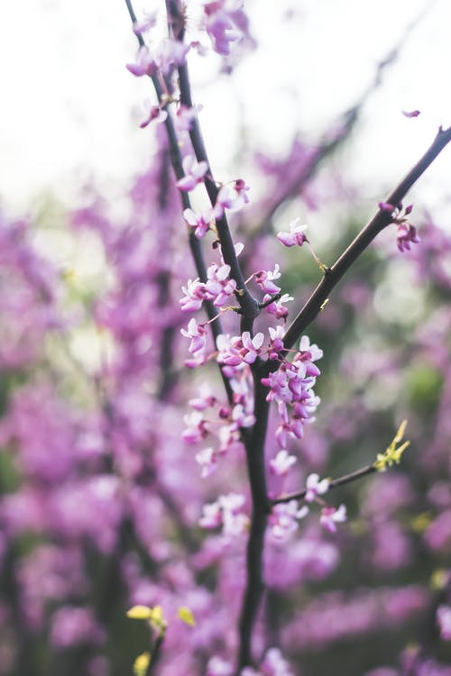 Foto profissional grátis de ao ar livre, aroma, aromático, binti malu