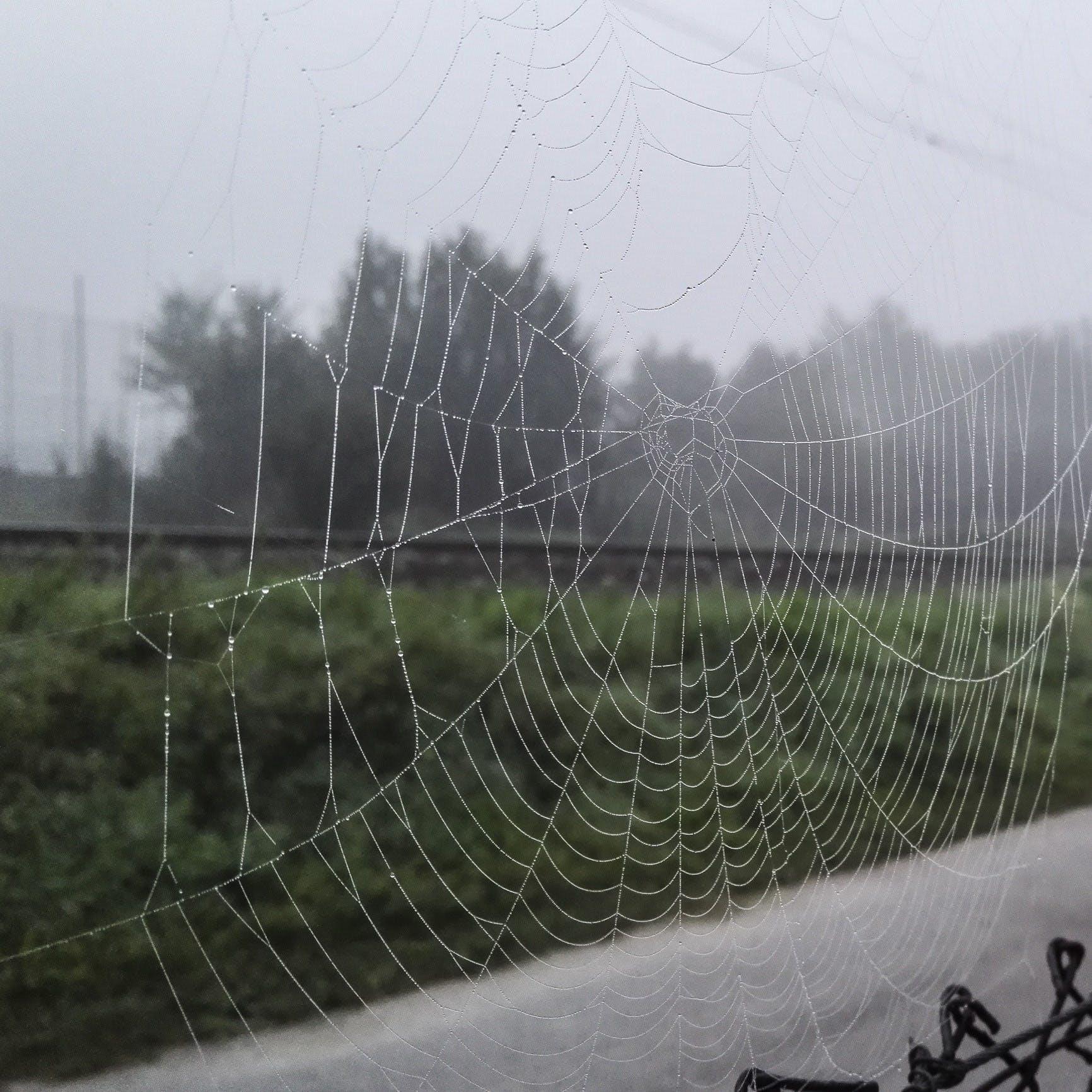 Základová fotografie zdarma na téma pavučina