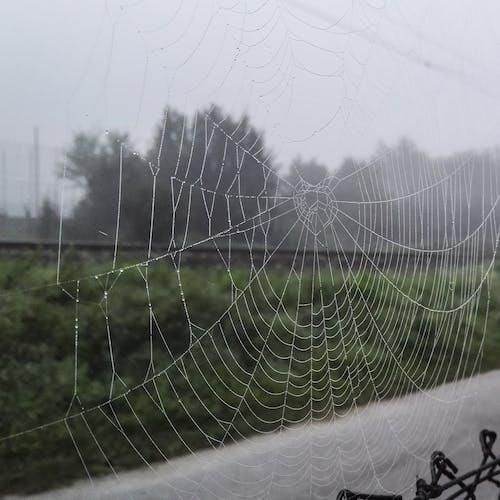 örümcek ağı içeren Ücretsiz stok fotoğraf