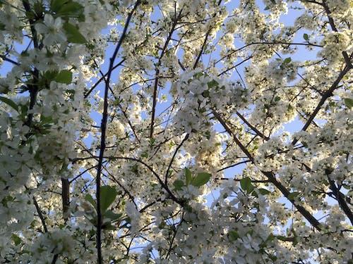 Photos gratuites de 4k, arbre, fond d'écran fleur, fond d'écran gratuit