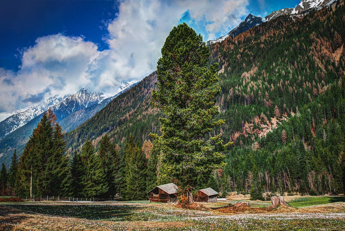 Photography of Fir Trees on Mountains