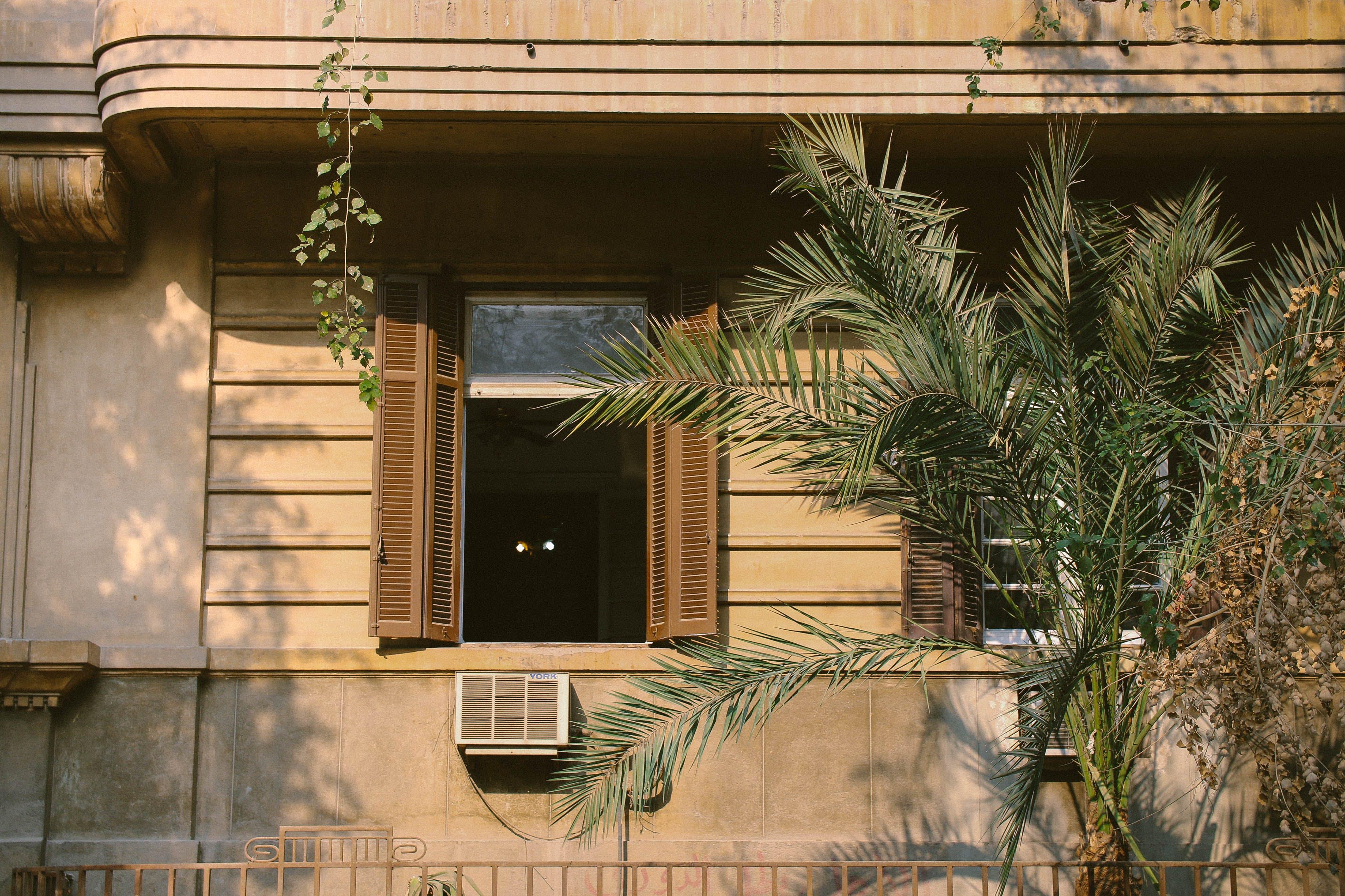 Free stock photo of architecture, balcony, dark green, decorative plant