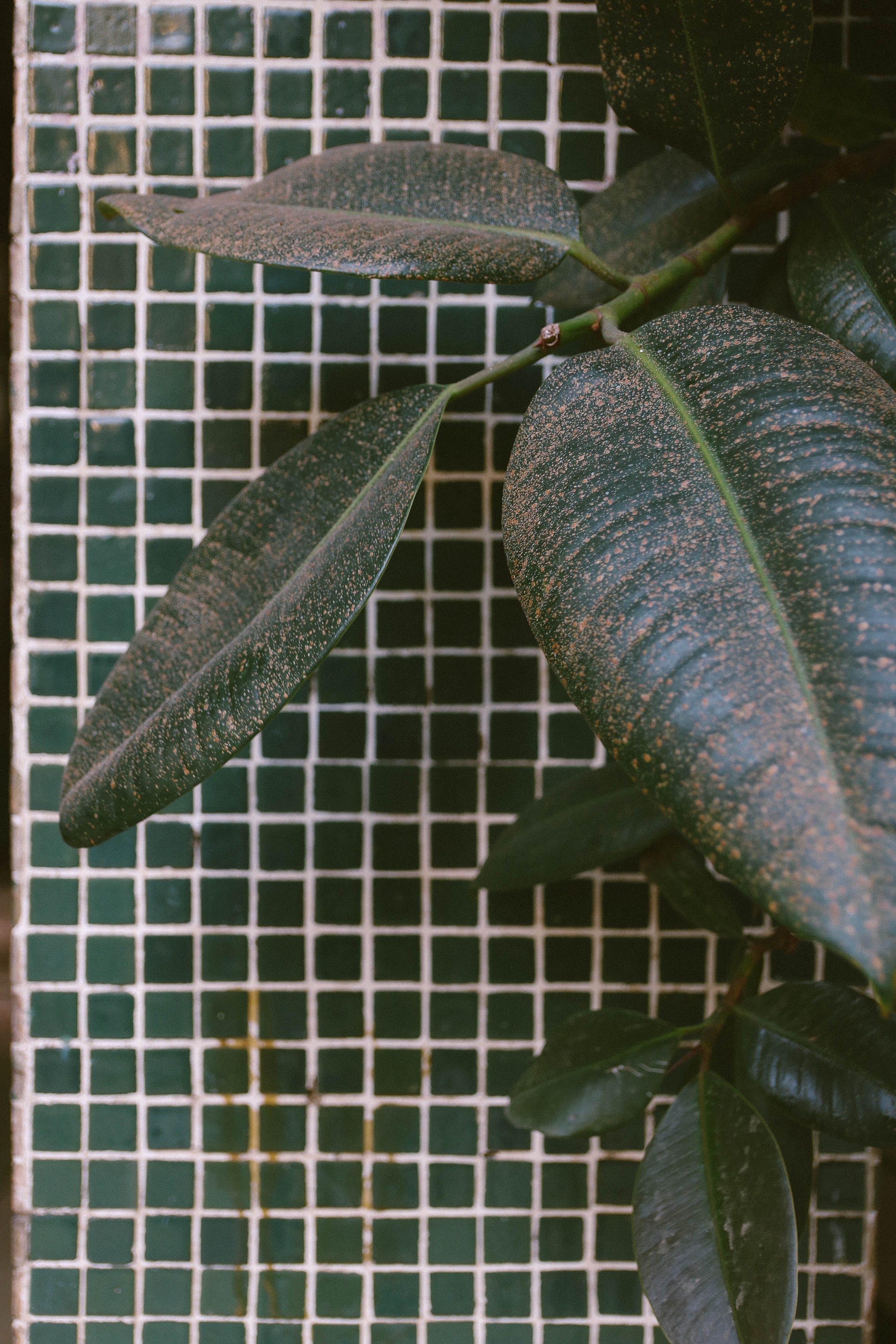 Free stock photo of balcony, dark green, decorative plant, exotic