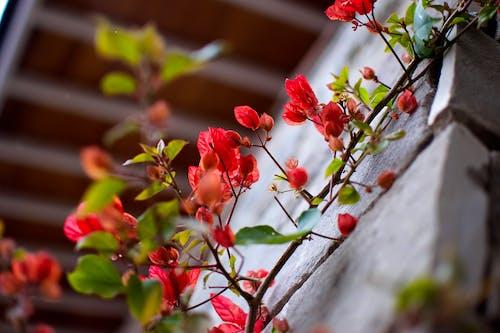 Photos gratuites de feuilles colorées