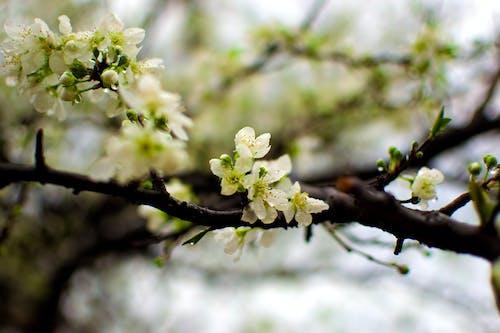 Photos gratuites de gouttes d'eau sur les fleurs