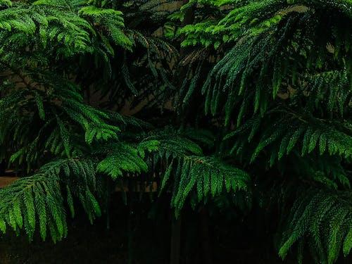 Безкоштовне стокове фото на тему «вродлива, дерево, дощ, завод»