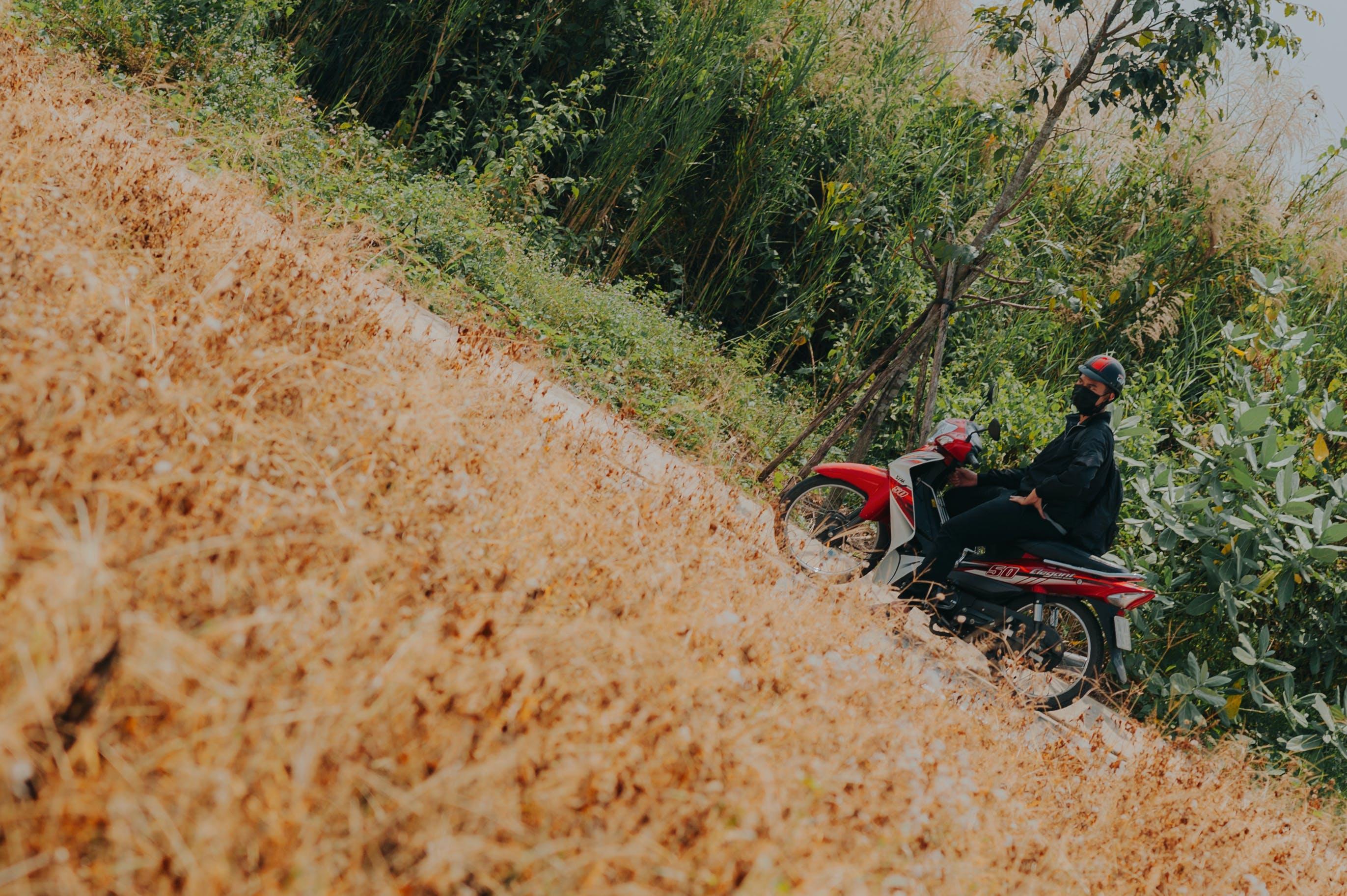 Foto d'estoc gratuïta de arbres, carretera, casc, conduint