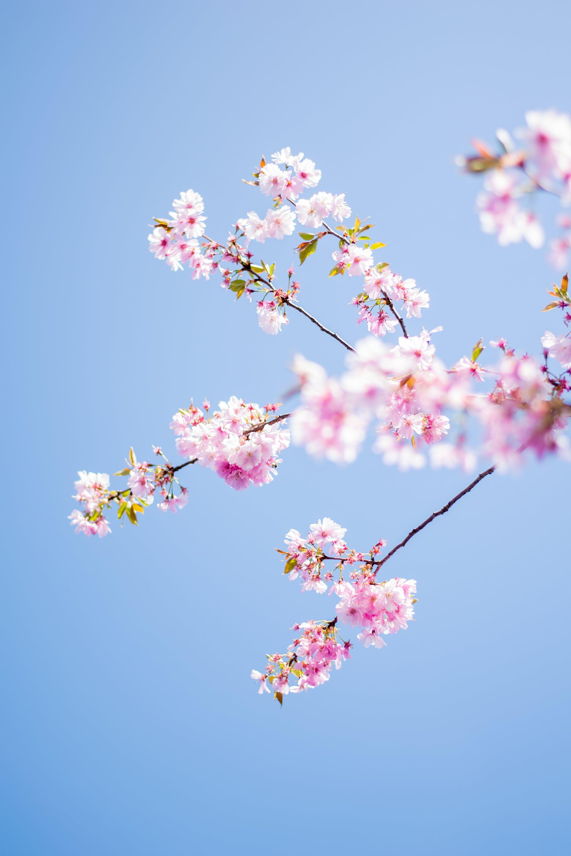 Free stock photo of blooming, blossom, blue, close up