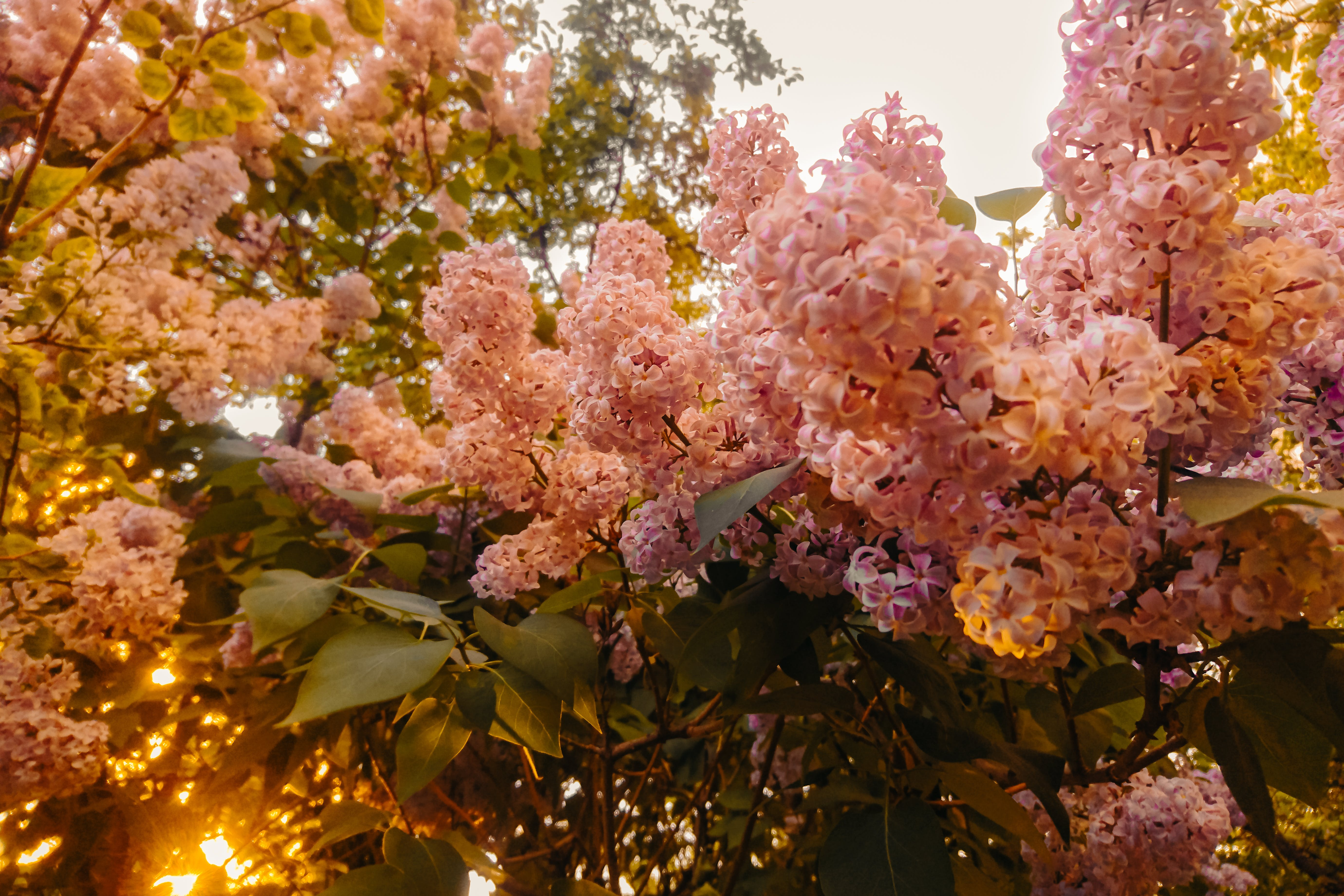 Photography of Pink Flowers