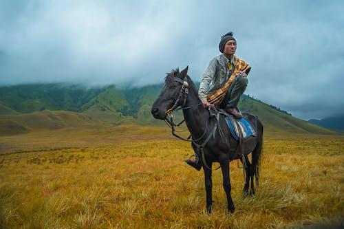 Fotos de stock gratuitas de animal, caballo, campo, césped