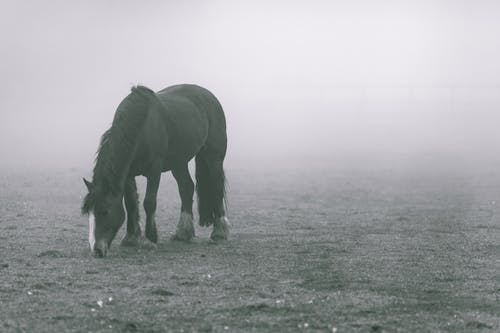 Black Horse on Grey Soil With Fogs