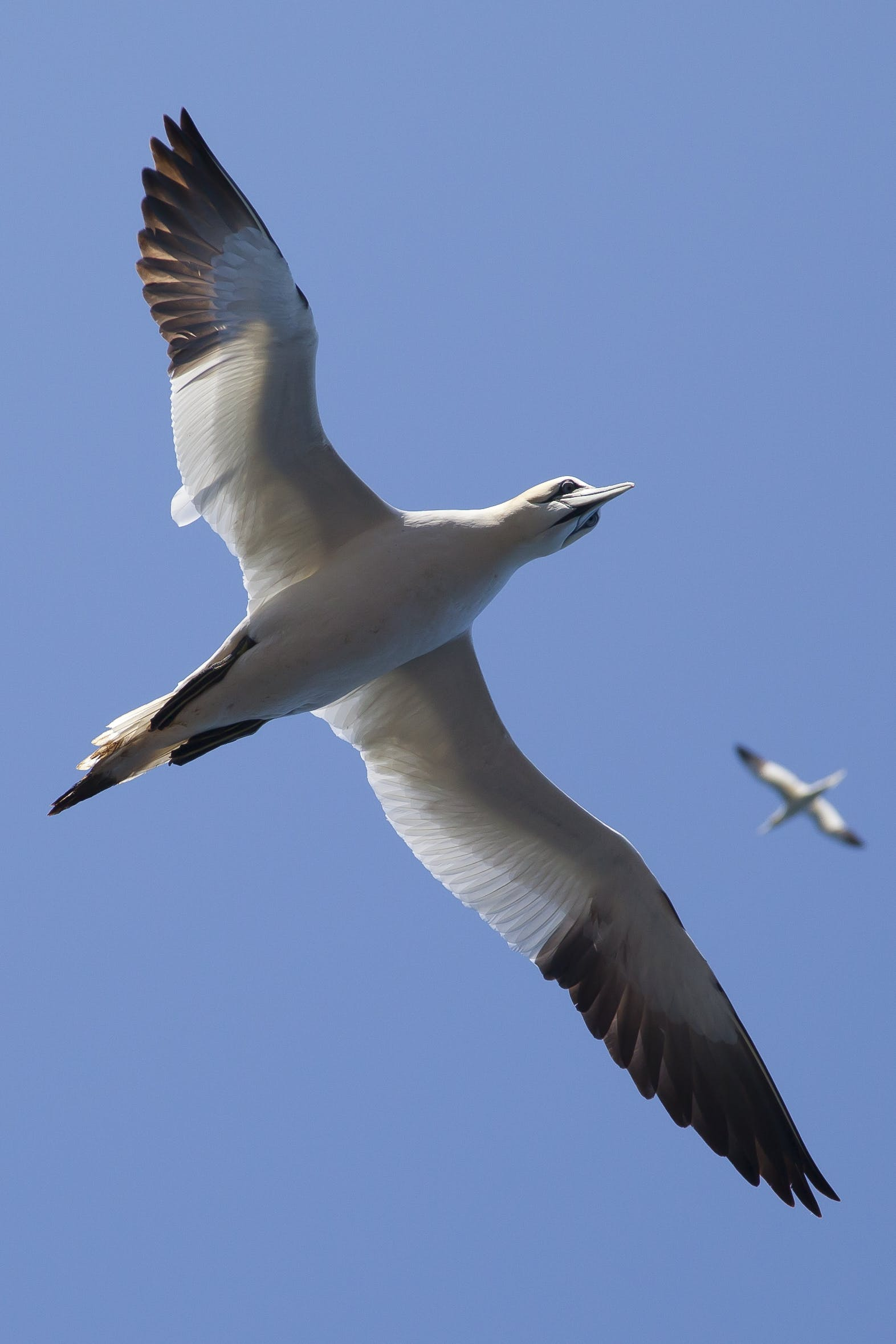 White and Black Bird Flying Under Blue Sky during Daytime
