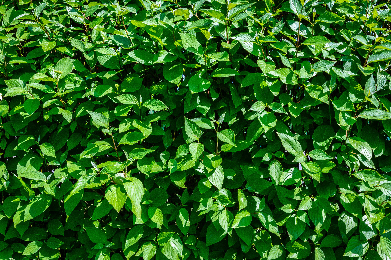 background, bushes, closeup