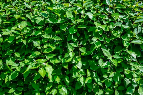 Free stock photo of background, bushes, closeup