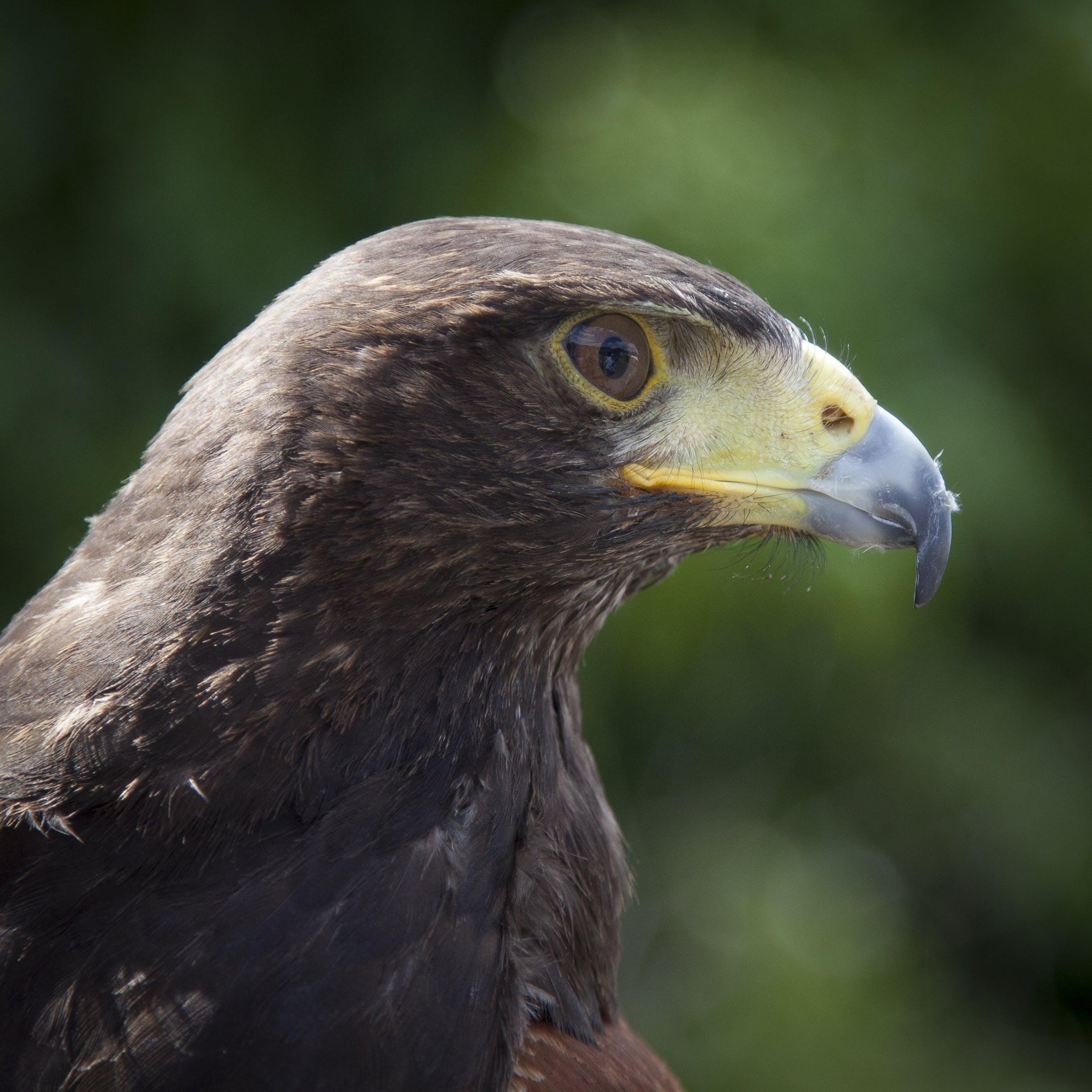 Black and Green Bird Tilt Shift Lens Photograph