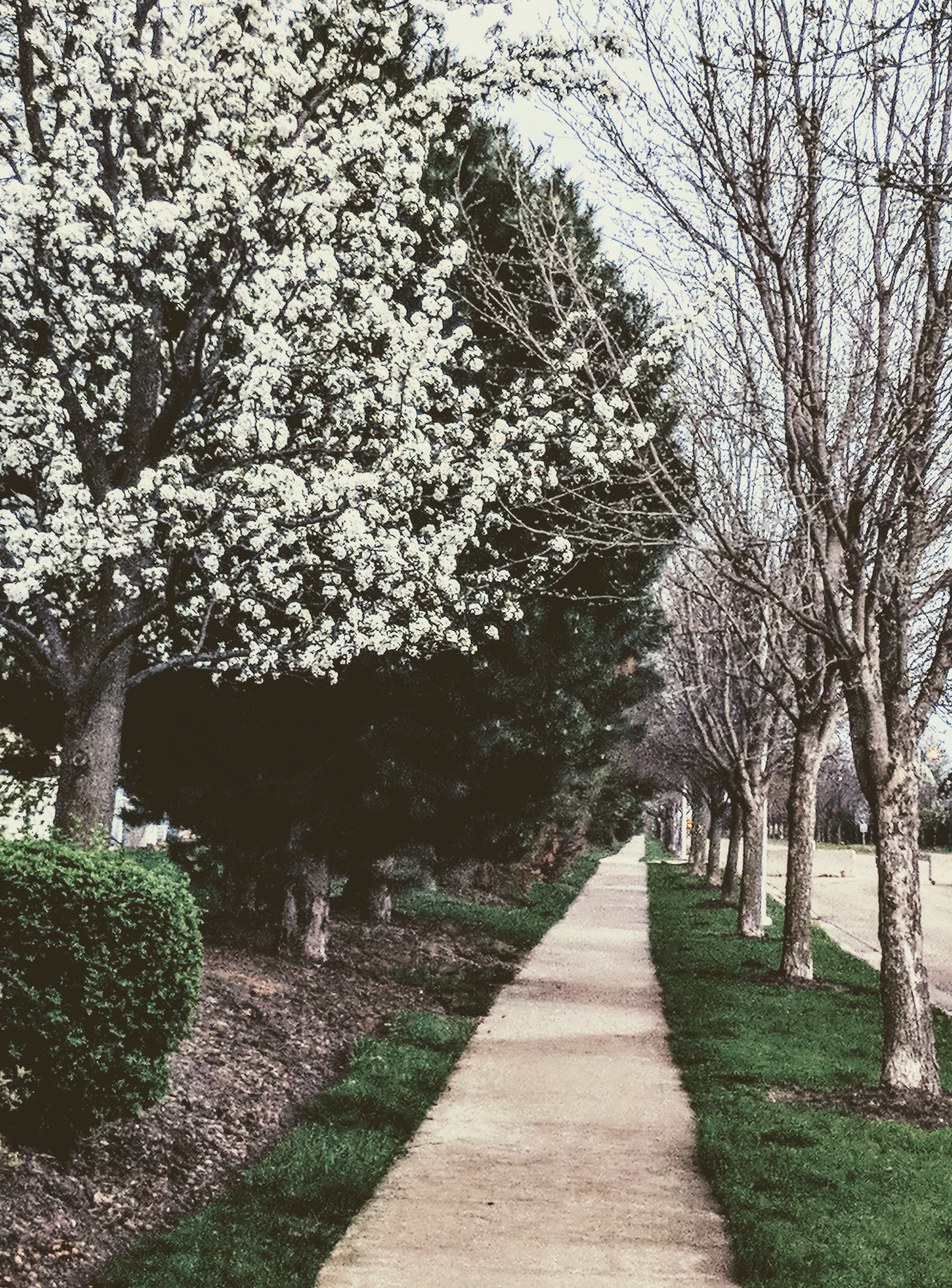 White Flowers On Trees