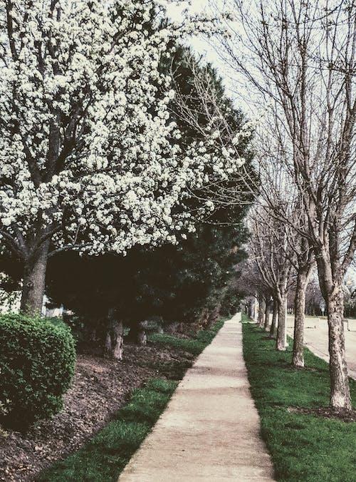 Photos gratuites de arbres, chemin, fleur, fleurir