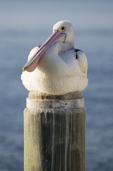 White and Black Bird on Brown Wooden Post